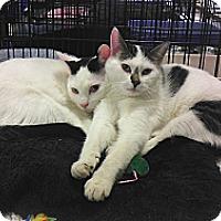 Adopt A Pet :: Jack & Jerry - Springfield, PA
