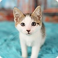 Adopt A Pet :: Genesis - Eagan, MN
