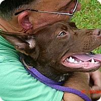 Adopt A Pet :: Harriet - Wakefield, RI