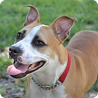 Adopt A Pet :: Mia - Naples, FL
