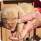 Adopt A Pet :: Tonto