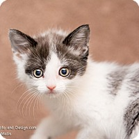 Adopt A Pet :: Precious - Fountain Hills, AZ