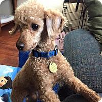 Adopt A Pet :: Cadbury - Prole, IA