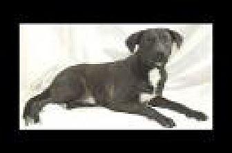 Labrador Retriever Mix Dog for adoption in Jackson, Mississippi - Blaze