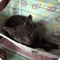 Adopt A Pet :: Bubbble - Byron Center, MI