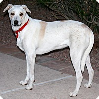 Adopt A Pet :: Donny - Gilbert, AZ