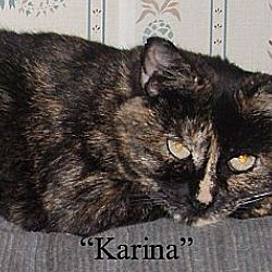 Photo 3 - Domestic Shorthair Cat for adoption in Germansville, Pennsylvania - Karina
