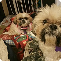 Adopt A Pet :: Emily Turner - Urbana, OH