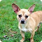 Adopt A Pet :: LIL DUDE
