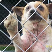 Adopt A Pet :: Lucas - Mexia, TX