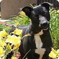 Adopt A Pet :: Jackie - Hastings, NE