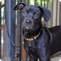 Adopt A Pet :: Addie - Baton Rouge, LA