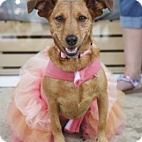 Adopt A Pet :: Lillian - Huntsville, AL