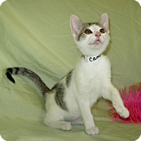 Adopt A Pet :: Campbell - Powell, OH