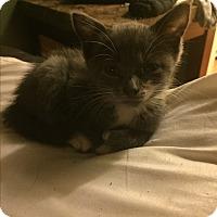 Adopt A Pet :: PUNKIN - Maybrook, NY