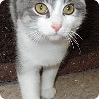 Adopt A Pet :: Nipper - Lapeer, MI