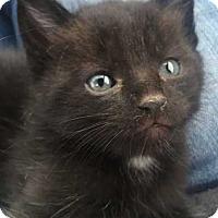 Adopt A Pet :: Vandy - Denver, CO
