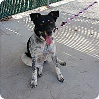 Adopt A Pet :: Eloise - Reno, NV