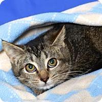 Adopt A Pet :: LUCINDA - Gloucester, VA