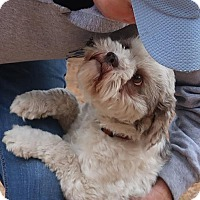 Adopt A Pet :: Vixey - Brattleboro, VT