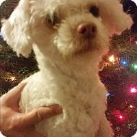 Adopt A Pet :: Tinky - Bakersfield, CA