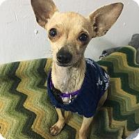 Adopt A Pet :: Grace - Houston, TX