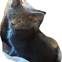 Adopt A Pet :: Tinsel - Geneseo, IL