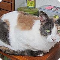 Adopt A Pet :: Tadpole - Amery, WI