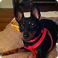 Adopt A Pet :: Marley - Wilmington, MA