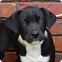 Adopt A Pet :: *Angelina - PENDING - Westport, CT