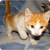 Adopt A Pet :: Rico - Oxford, NY
