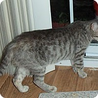 Adopt A Pet :: Daphne - Catasauqua, PA