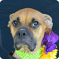 Adopt A Pet :: Princess - Plano, TX