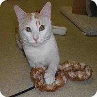 Adopt A Pet :: Iggy - Phoenix, AZ