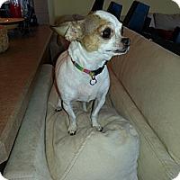 Adopt A Pet :: Nina - Dayton, OH