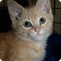 Adopt A Pet :: Oliver - Stafford, VA
