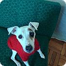 Adopt A Pet :: Cush