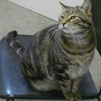 Adopt A Pet :: Penelope - Huntsville, AL