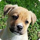 Adopt A Pet :: Becky! **FOSTER NEEDED**