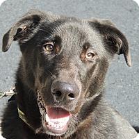 Adopt A Pet :: Travis - Allentown, PA