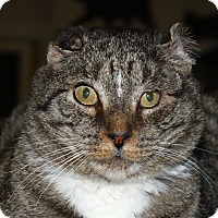 Adopt A Pet :: Boris - North Branford, CT
