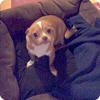 Adopt A Pet :: Nola - Tavares, FL