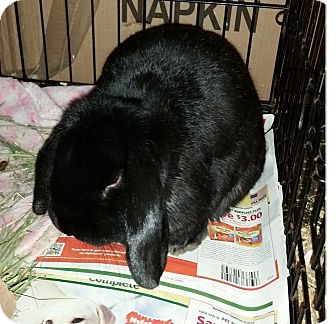 Lop, French for adoption in Greenfield, Indiana - Nick
