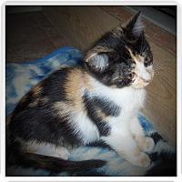Adopt A Pet :: BRIE - Medford, WI