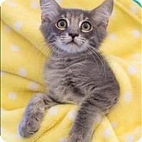 Adopt A Pet :: Avalanche - San Luis Obispo, CA
