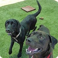 Adopt A Pet :: Athena - Yorktown, VA