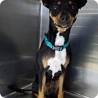 Adopt A Pet :: S/C Shiloh - Miami, FL