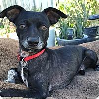 Adopt A Pet :: Jackie -