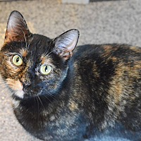 Adopt A Pet :: Mona - Lincoln, NE