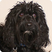 Adopt A Pet :: Clementine - Walnut Creek, CA